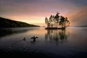 Nature 365, les haïkus de Jim Brandenburg